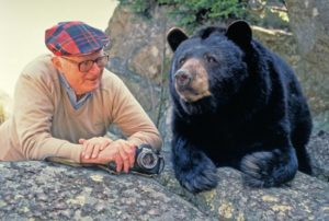 Black Bear laying on rock next to white male.
