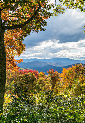 View of mountains. Colorful trees are the back drop.. Colors are red, yellow and orange. The sky is blue with white clouds that surround the mountains.