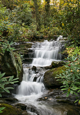 small waterfall surrounded by Rhododendrons and other plants and trees