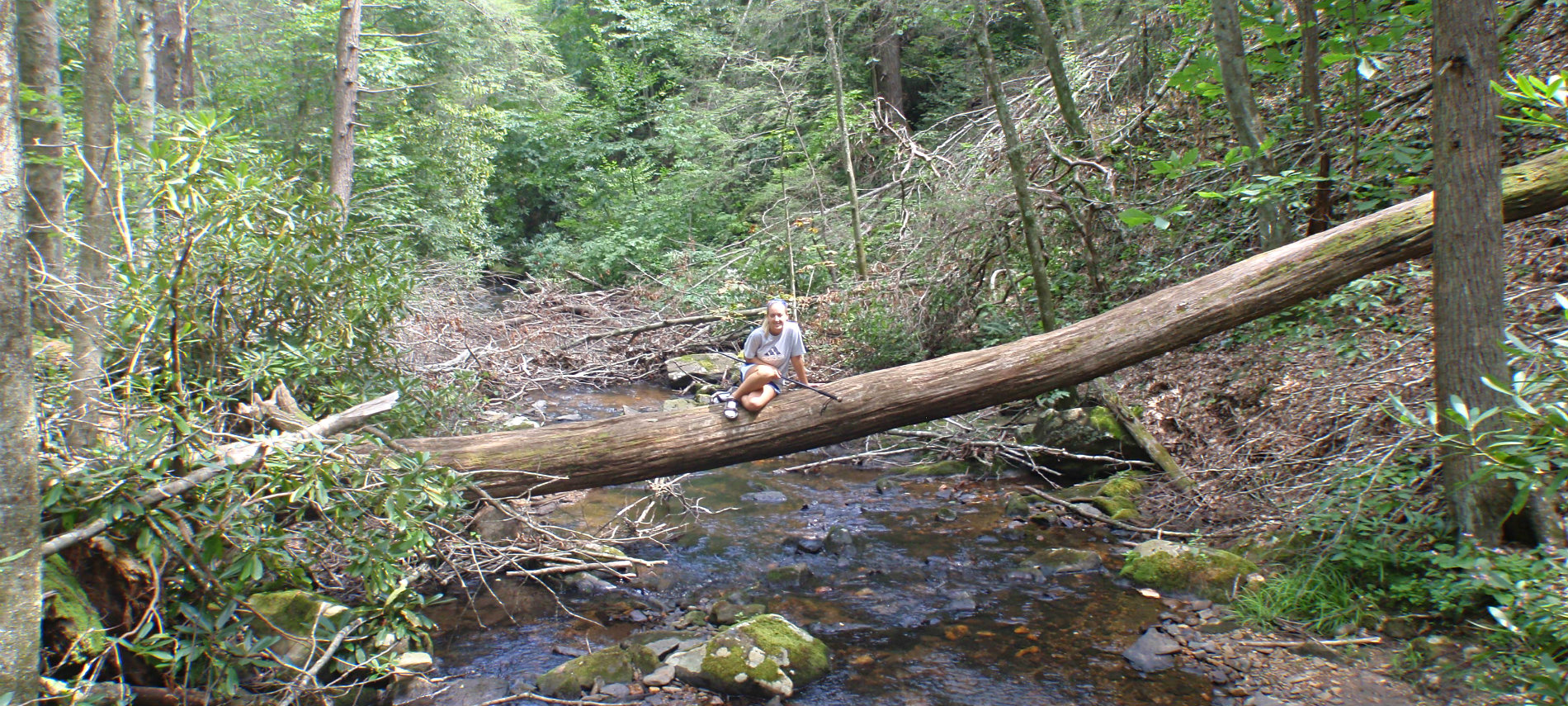 Girl sitting on a large tree that fell across the river. Trees are surrounding both sides of the river.